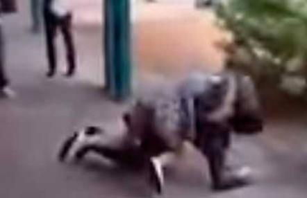 Acosadora es humillada con técnicas de Muay Thai